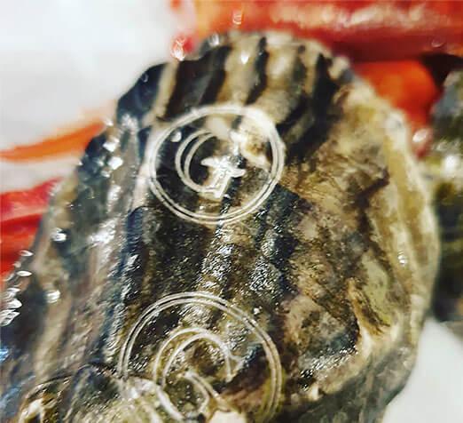 gillardeau-marked-ostrick-1 Dlaczego warto śledzić swoje produkty? Podrabianie i upadek świadomości marki